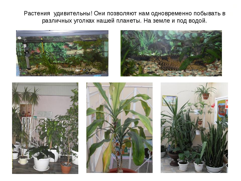Растения удивительны! Они позволяют нам одновременно побывать в различных уго...