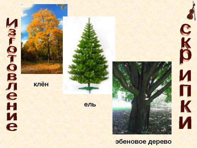 клён ель эбеновое дерево