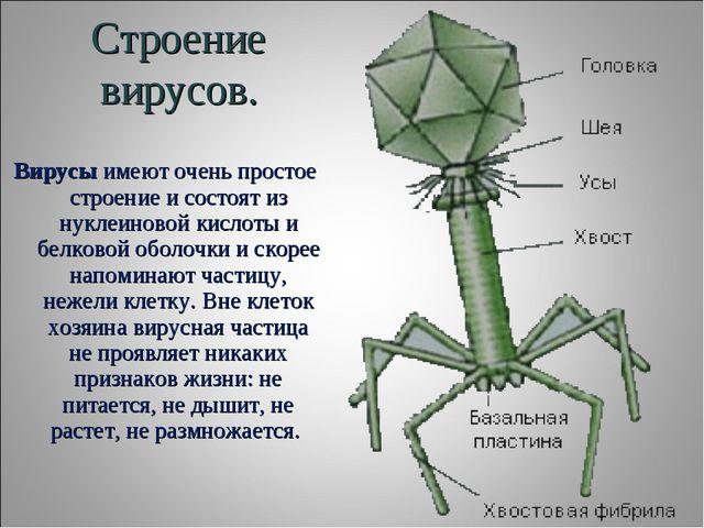 Строение вирусов. Вирусыимеют очень простое строение и состоят из нуклеиново...