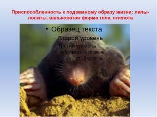 Приспособленность к подземному образу жизни: лапы-лопаты, вальковатая форма т