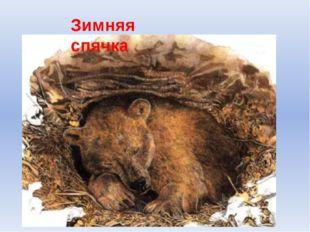 Зимняя спячка