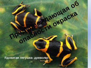 Предупреждающая об опасности окраска Ядовитая лягушка- древолаз