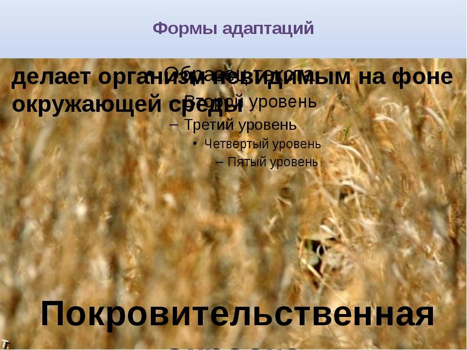 Формы адаптаций делает организм невидимым на фоне окружающей среды Покровител...