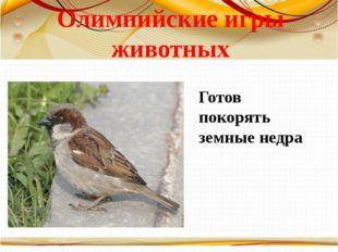 Олимпийские игры животных Готов покорять земные недра Борисова Анна Владимиро