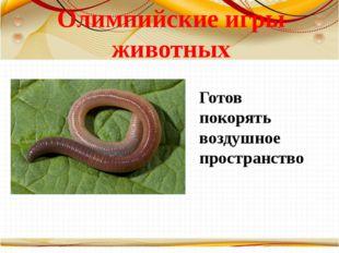 Олимпийские игры животных Готов покорять воздушное пространство Борисова Анна