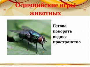 Олимпийские игры животных Готова покорять водное пространство Борисова Анна В