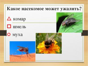 Какое насекомое может ужалить?  комар  шмель  муха