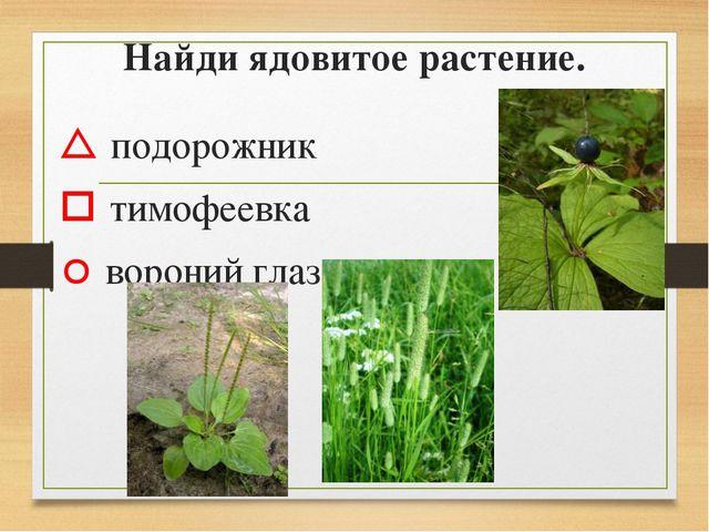 Найди ядовитое растение.  подорожник  тимофеевка  вороний глаз