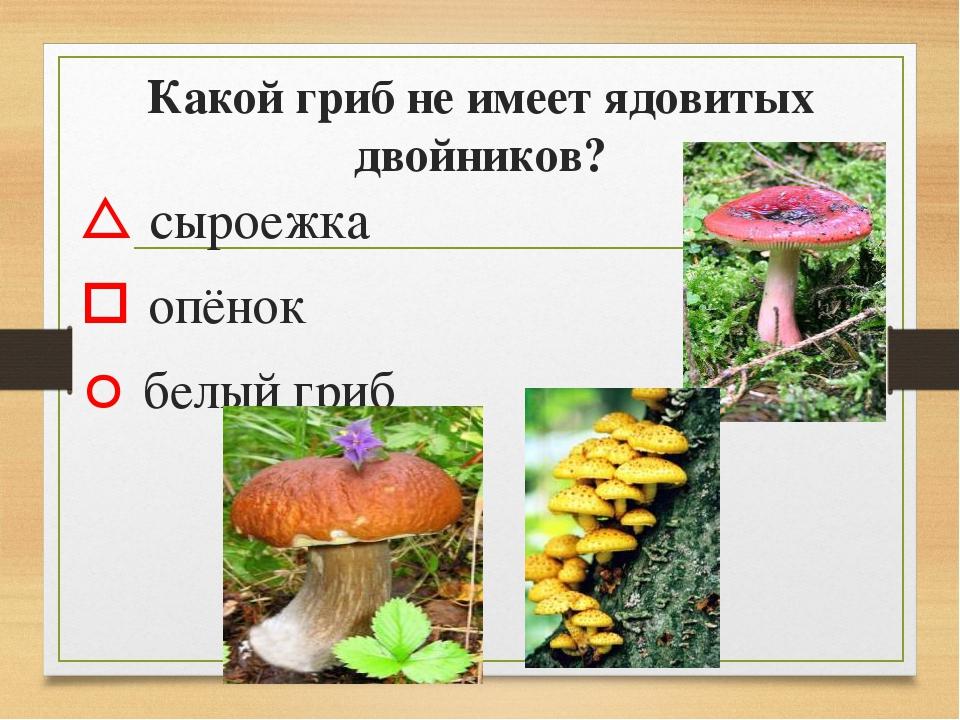 Какой гриб не имеет ядовитых двойников?  сыроежка  опёнок  белый гриб