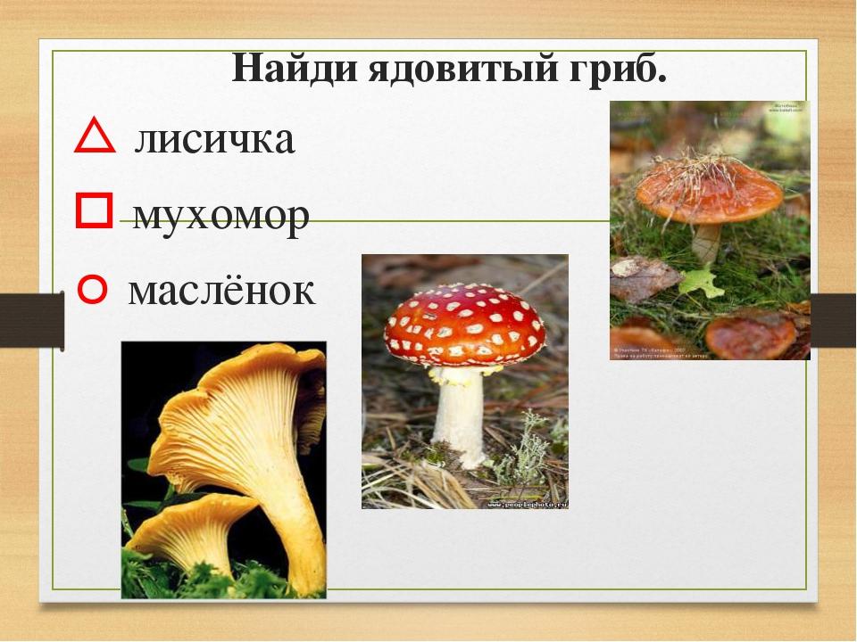 Найди ядовитый гриб.  лисичка  мухомор  маслёнок