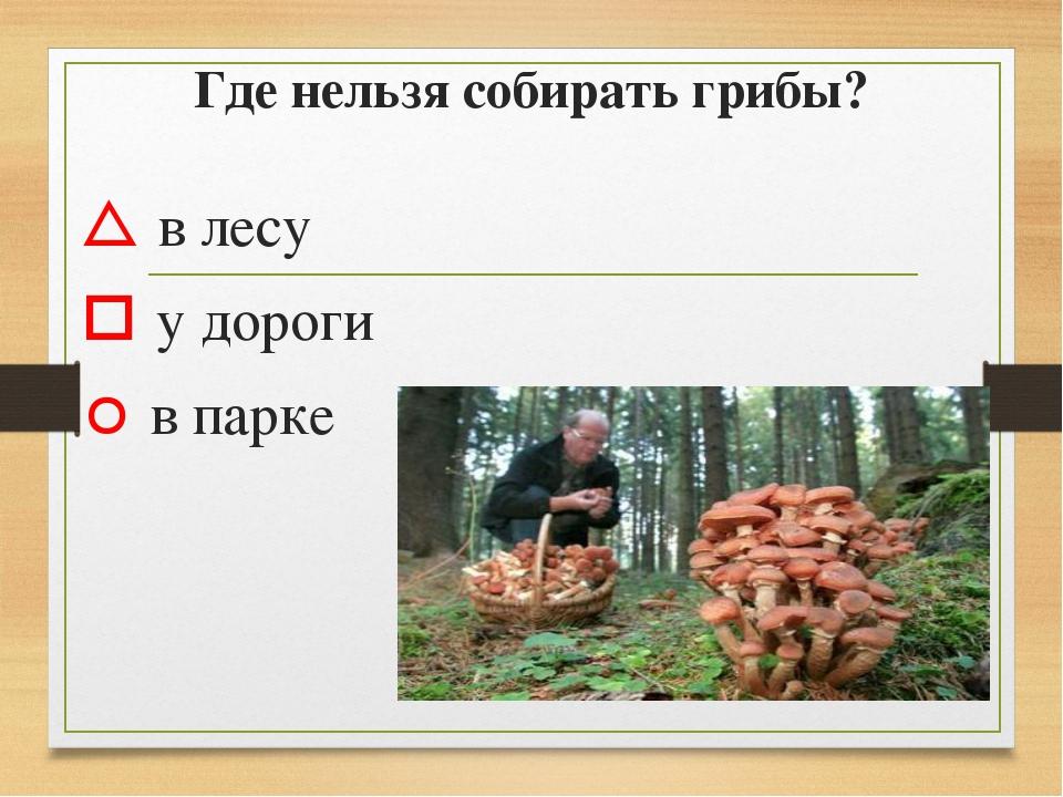 Где нельзя собирать грибы?  в лесу  у дороги  в парке
