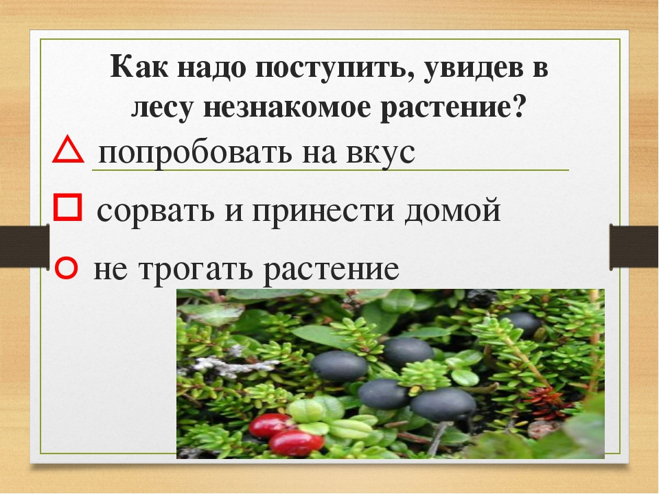 Как надо поступить, увидев в лесу незнакомое растение?  попробовать на вкус...