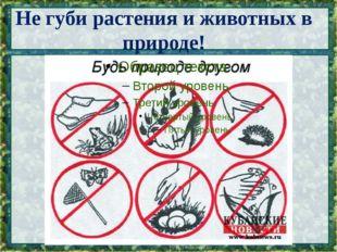 Не губи растения и животных в природе!