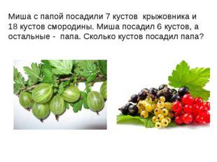 Миша с папой посадили 7 кустов крыжовника и 18 кустов смородины. Миша посадил