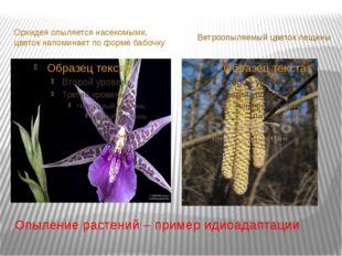 Опыление растений – пример идиоадаптации Орхидея опыляется насекомыми, цветок
