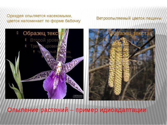 Опыление растений – пример идиоадаптации Орхидея опыляется насекомыми, цветок...