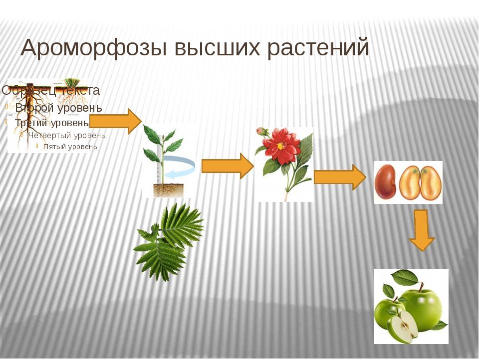 Ароморфозы высших растений