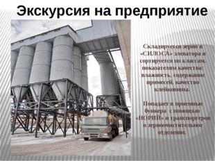 Складируется зерно в «СИЛОСА» элеватора и сортируется по классам, показателя