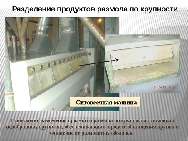 Ситовеечная машина Происходит разделение продуктов размола по крупности с пом...