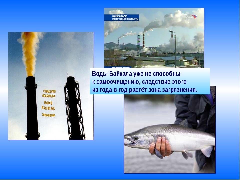 Воды Байкала уже не способны к самоочищению, следствие этого из года в год ра...