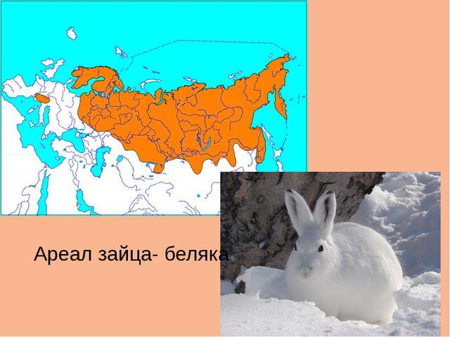 Ареал зайца- беляка
