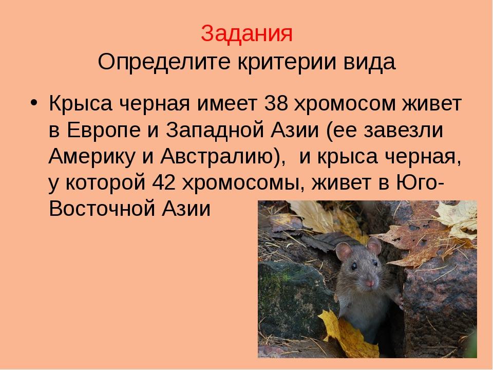 Задания Определите критерии вида Крыса черная имеет 38 хромосом живет в Европ...