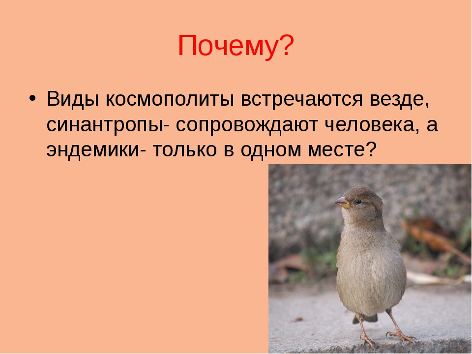 Почему? Виды космополиты встречаются везде, синантропы- сопровождают человека...