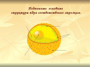 Подпишите основные структуры ядра соответственно стрелкам.