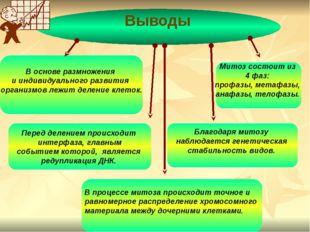 В основе размножения и индивидуального развития организмов лежит деление кле