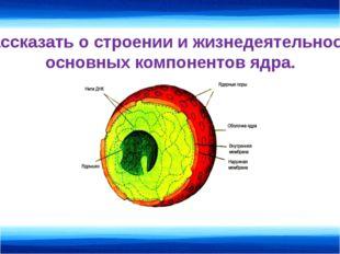 Рассказать о строении и жизнедеятельности основных компонентов ядра.