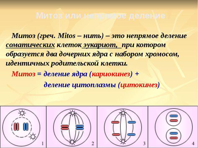 Митоз (греч. Mitos – нить) – это непрямое деление соматических клеток эукари...