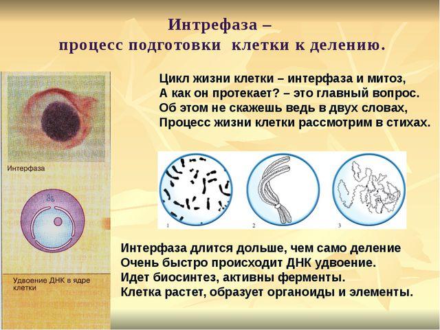 Цикл жизни клетки – интерфаза и митоз, А как он протекает? – это главный воп...