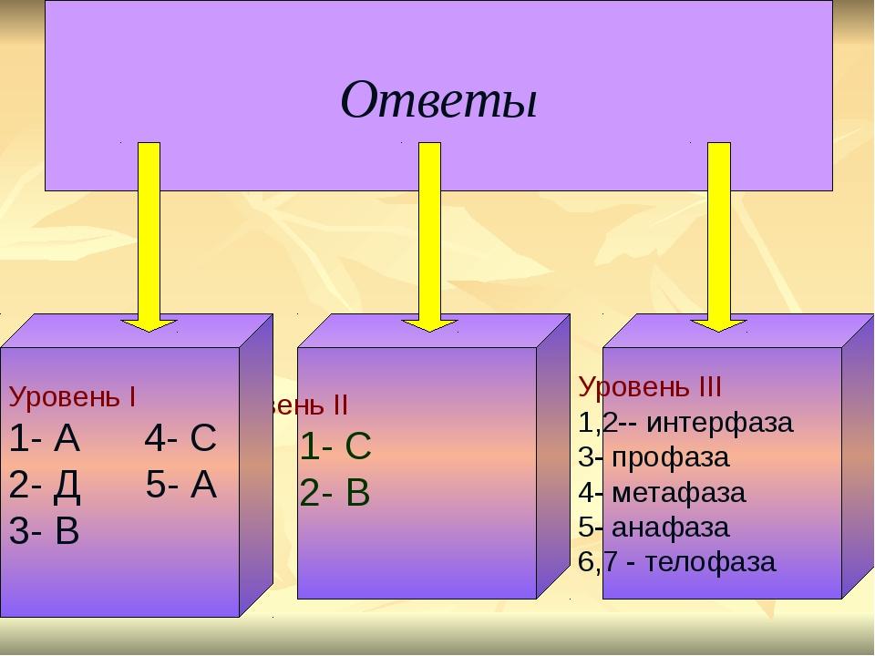 Ответы Уровень II 1- C 2- В Уровень III 1,2-- интерфаза 3- профаза 4- метафаз...
