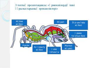 3 топтың презентациясы: «Өрмекшілердің ішкі құрылыстарының ерекшеліктері» Жүр