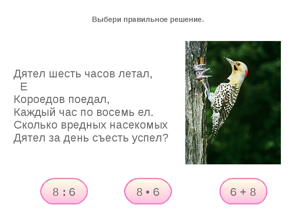 Дятел шесть часов летал, Е Короедов поедал, Каждый час по восемь ел. Сколько...