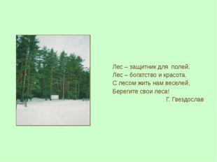 Лес – защитник для полей, Лес – богатство и красота. С лесом жить нам веселей