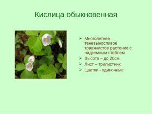 Кислица обыкновенная Многолетнее теневыносливое травянистое растение с надзем