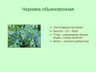 Черника обыкновенная Листопадный кустарник Высота – 15 – 40см Плод – шаровидн
