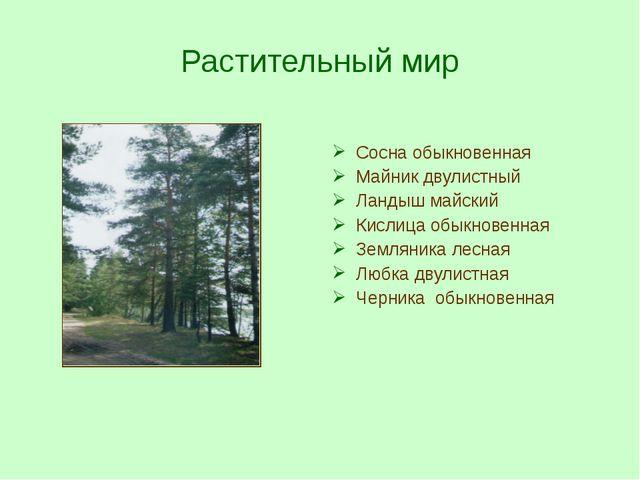 Растительный мир Сосна обыкновенная Майник двулистный Ландыш майский Кислица...