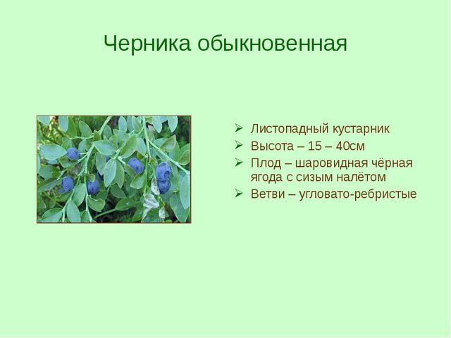 Черника обыкновенная Листопадный кустарник Высота – 15 – 40см Плод – шаровидн...