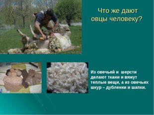 Что же дают овцы человеку? Из овечьей и шерсти делают ткани и вяжут теплые ве
