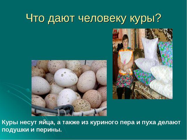 Что дают человеку куры? Куры несут яйца, а также из куриного пера и пуха дела...