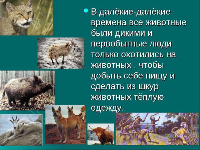 В далёкие-далёкие времена все животные были дикими и первобытные люди только...