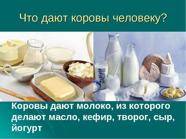 Что дают коровы человеку? Коровы дают молоко, из которого делают масло, кефир...