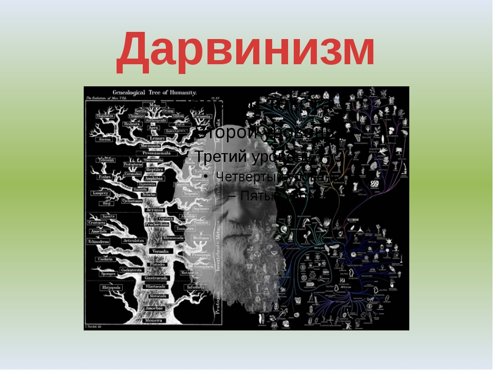 Дарвинизм