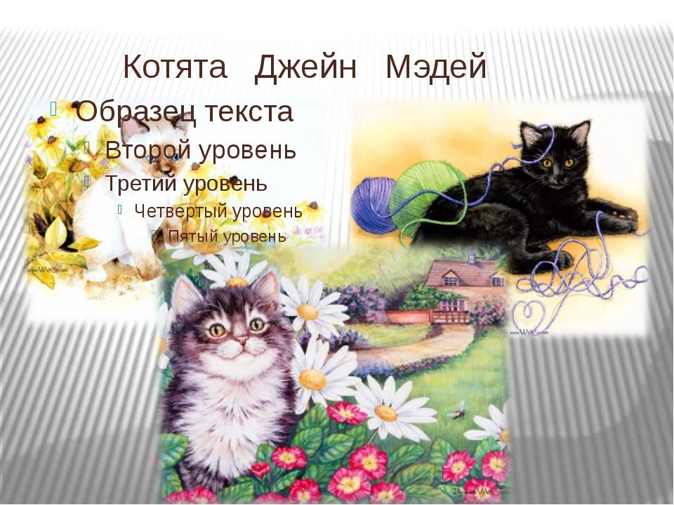Котята Джейн Мэдей