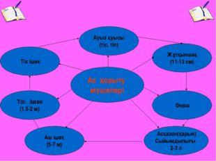 Асқазан(қарын) Сыйымдылығы 2-3 л Аш ішек (5-7 м) Ас қорыту мүшелері Тік ішек