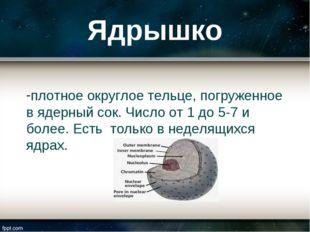Ядрышко плотное округлое тельце, погруженное в ядерный сок. Число от 1 до 5-7