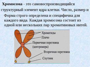 Хромосома - это самовоспроизводящийся структурный элемент ядра клетки. Число