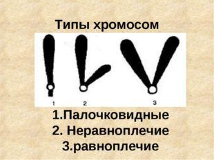 Типы хромосом 1.Палочковидные 2. Неравноплечие 3.равноплечие